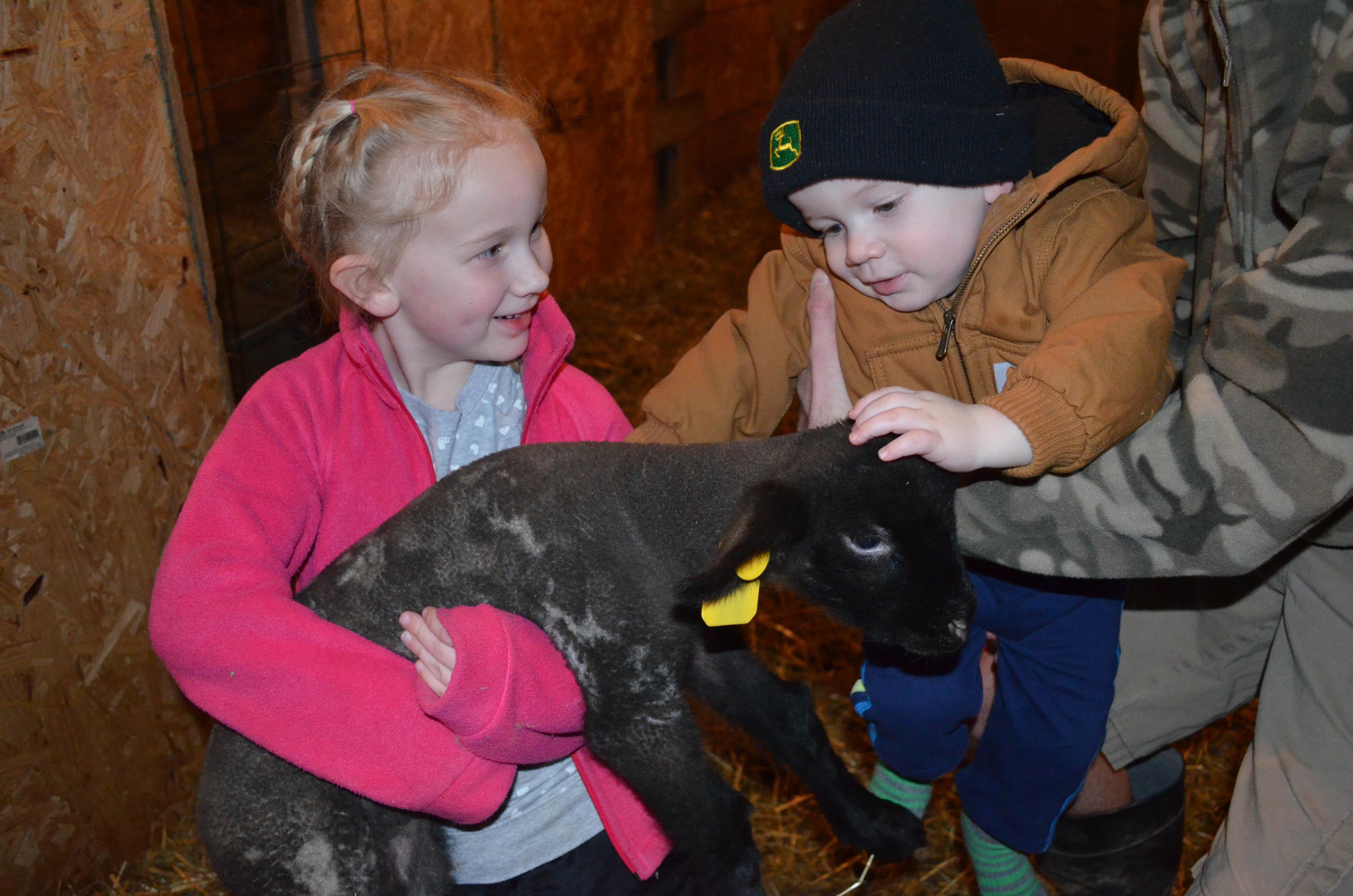 Image Gobin Club Lambs