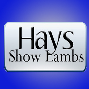 Image Hays Show Lambs