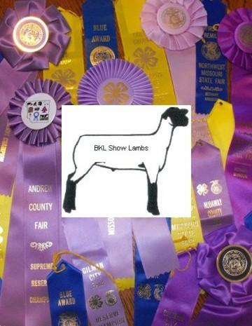 Image BKL Show Lambs